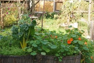 Hochbeet mit Gemüse und Kräuter 5